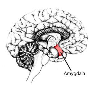@negative thinking amygdala min